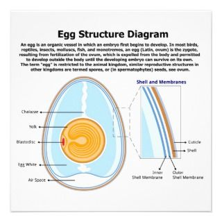 Diagram of the Anatomy of an Egg Custom Invitation