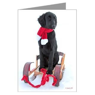 Flat Coated Retriever Greeting Cards  Buy Flat Coated Retriever Cards