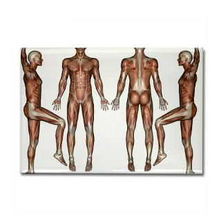 magnet 10 pack $ 23 29 muscle chart rectangle magnet 100 pack $ 165 49