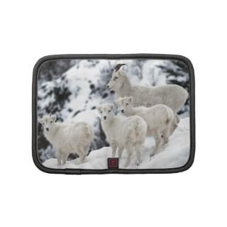 Dall Sheep Organizer
