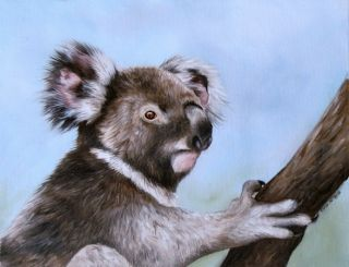 Koala Sarah Stribbling Original Oil Painting