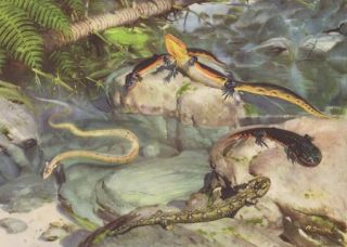 Prehistoric Salamanders Lizards Crocodile Snakes Color Print Z Burian