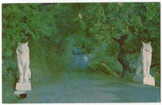 The Cats Los Gatos CA California San Jose 1950s