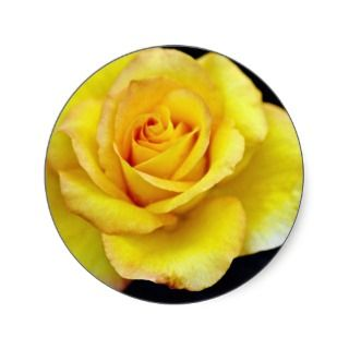 Hybrid Tea Rose flowers Round Stickers