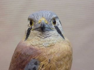 607 Finest Wood Bird Sculpture Hawk Signed Lloyd MacBride