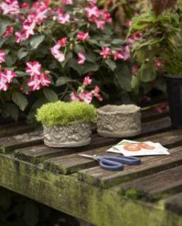 Napa Home Garden Richard Taylor Faux Bois Acorn Pots
