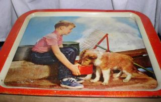 Vintage Metal TV Tray Little Boy in Tennis Shoes Feeding Collie