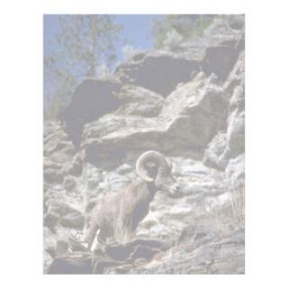 California bighorn sheep (Ram alert on mountain cl Letterhead