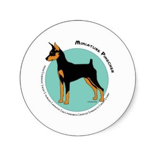 Min Pin Fearless Black and Tan on Green Round Stickers