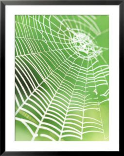 Spiders Web with Morning Dew, Threads Illuminated &  White Against Green Backdrop Pre made Frame