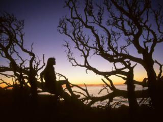 Woman Sitting on Tangled Tree Branches at Dusk Photographic Print by Skip Brown