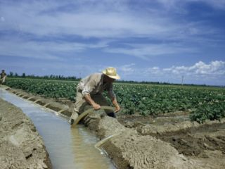 Man Works with Tubes to Siphon Irrigation Water from Channel to Field Photographic Print by Joseph Baylor Roberts