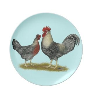 Cream Legbar Chickens Dinner Plate