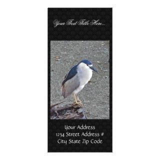 Black crowned night heron rack card design