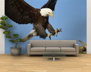 American Bald Eagle Comes in for a Landing on a Dead Tree Branch Wall Mural – Large by Paul Nicklen