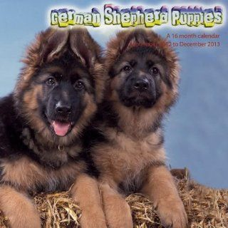 German Shepherd Puppies 2013 Kalender: Magnum: Bücher