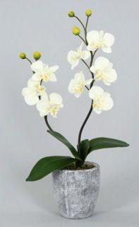 Homestyles 109319 48 608817 Orchidee cremefarbig mit Topf 40 cm