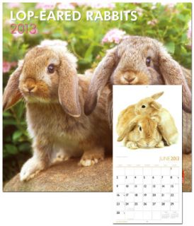 Lop Eared Rabbits   2013 Wall Calendar Calendars