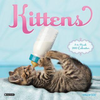 Kittens   2013 Wall Calendar Calendars
