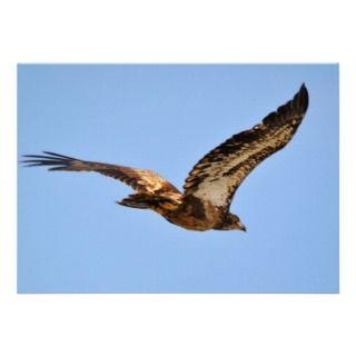 Golden Eagle Kalifornsky Beach Alaska Announcements