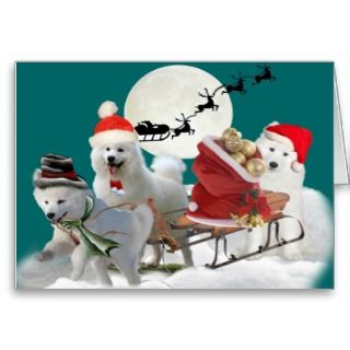 Playful Christmas Samoyed pups playing in snow on their sled filled