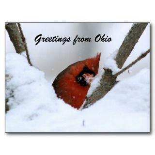 Greetings Ohio Postcards