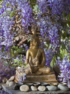 A Small Buddha Shrine Surrounded by Wisteria in Hotel Gangtey Palace, 100 Year Old Building, Once a Photographic Print by Nigel Pavitt