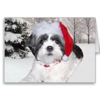 Christmas Shih Tzu Card
