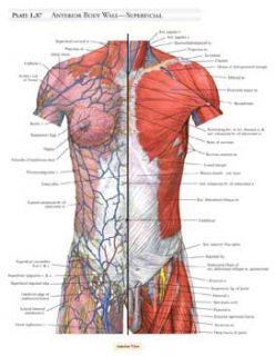 Student Atlas of Anatomy (Mps Siam Series on Optimizatio