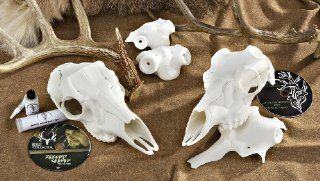 The Skull Master Antler Mount Kit: Sports & Outdoors