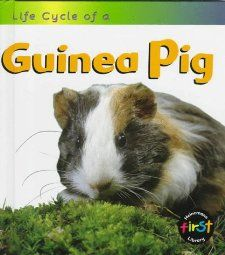 Guinea Pig (Life Cycle of A): Angela Royston: 9781575726144: