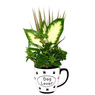 Love My Dog Five inch Ceramic Live Tropical Foliage Planter